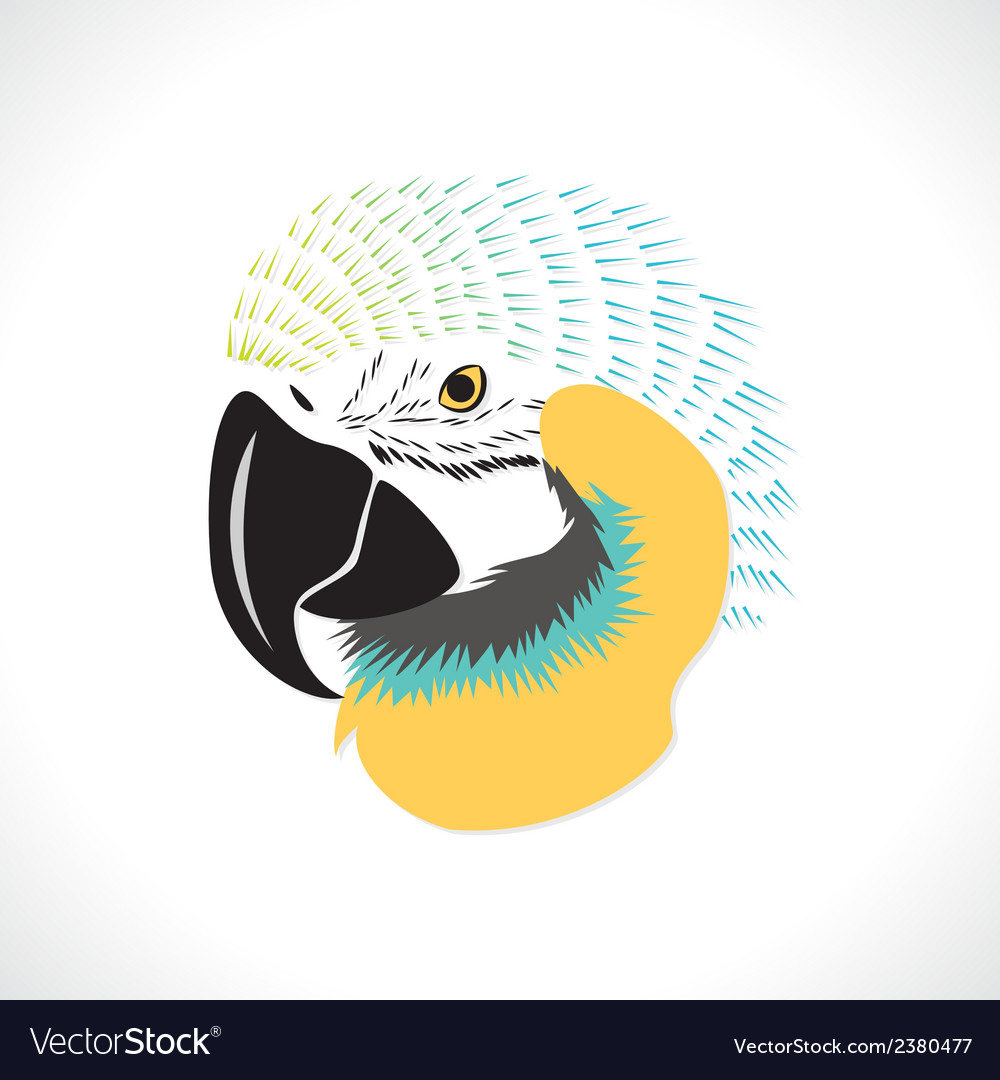 Macaw vector | Price: 1 Credit (USD $1)