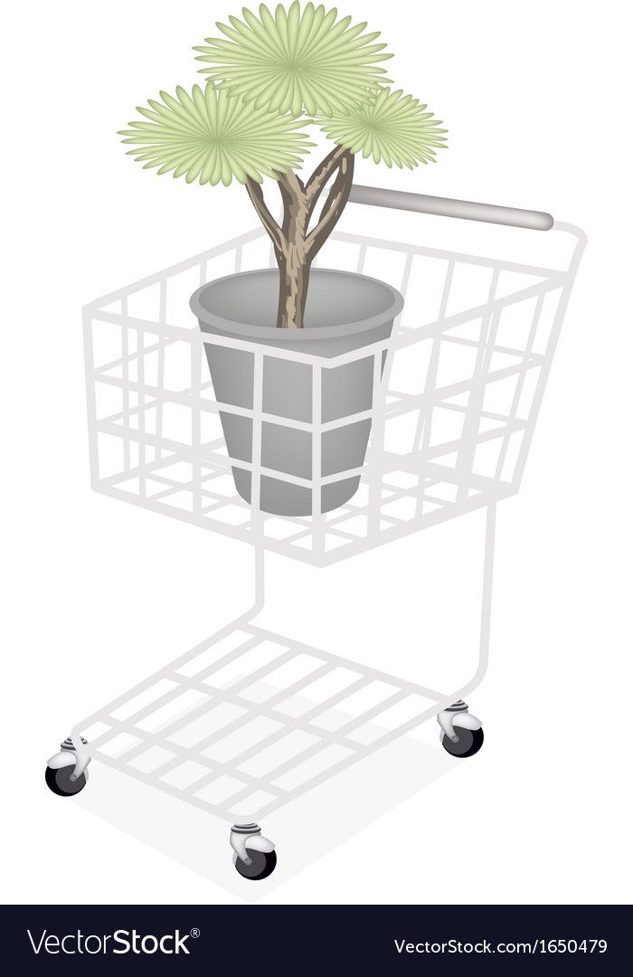 Beautiful dragon tree in a shopping cart vector | Price: 1 Credit (USD $1)