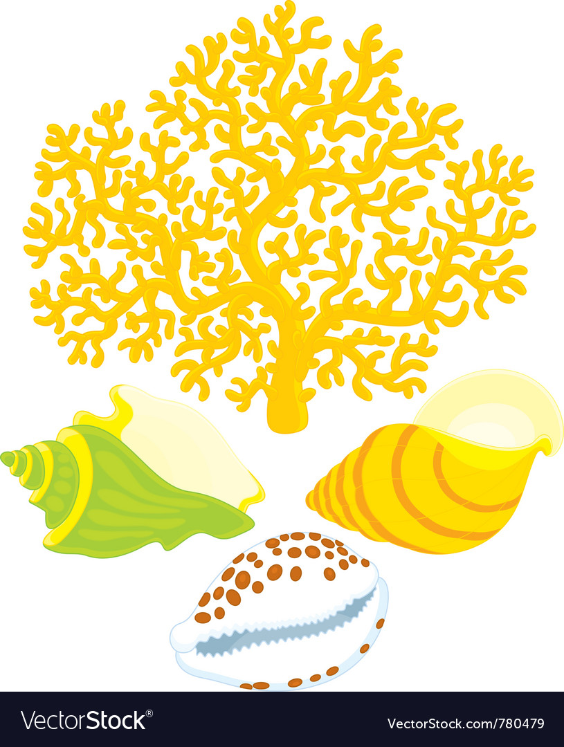 Coral and shells vector | Price: 3 Credit (USD $3)