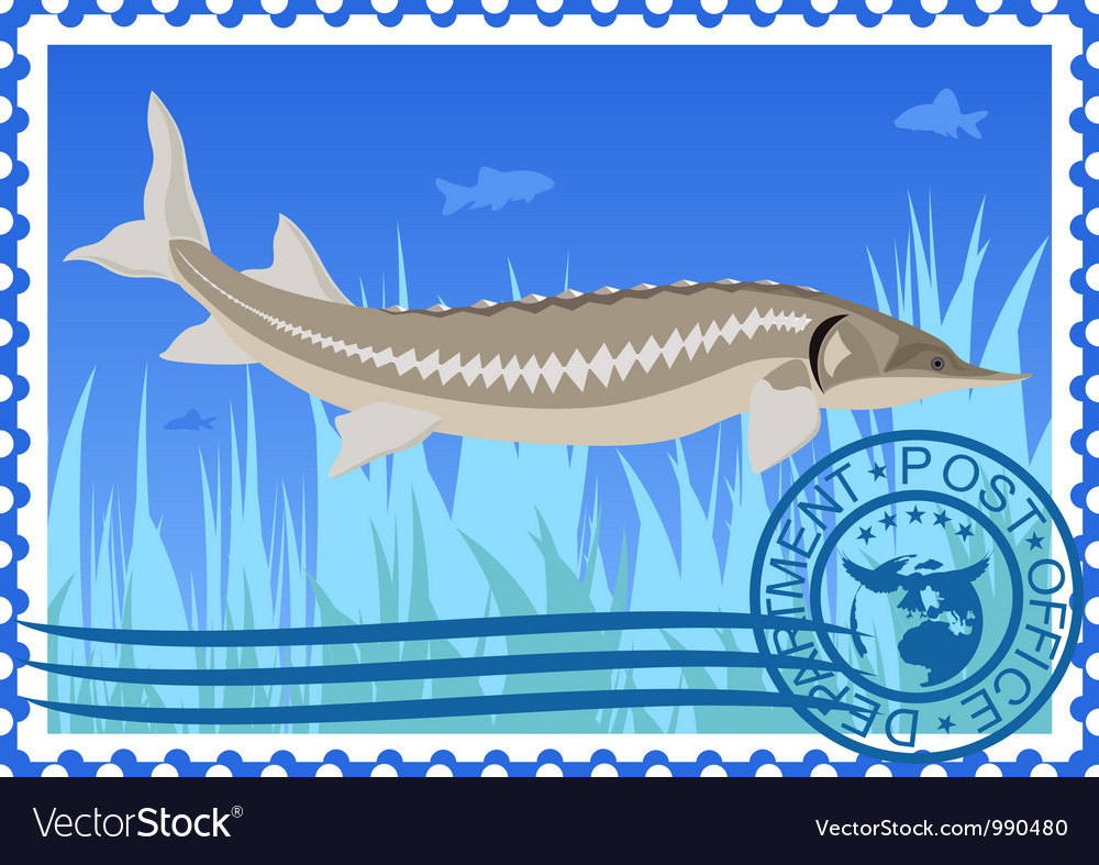 Postage stamp sturgeon vector | Price: 3 Credit (USD $3)