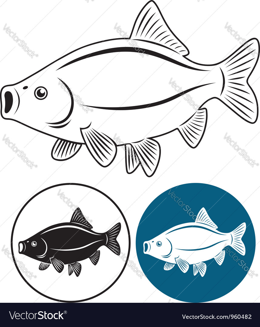 Fish rudd vector | Price: 1 Credit (USD $1)