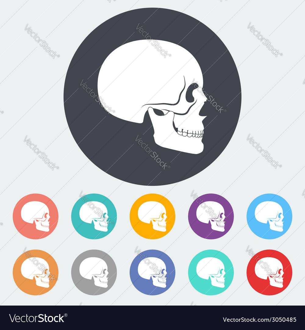 Anotomy skull vector | Price: 1 Credit (USD $1)