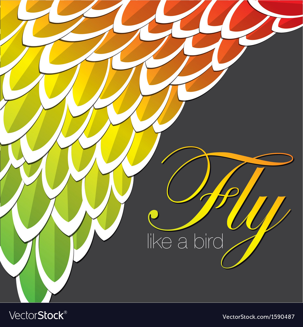 Coloured feathers vector | Price: 1 Credit (USD $1)
