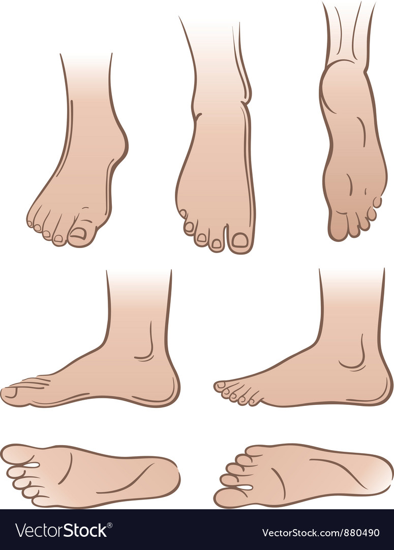 Feet vector | Price: 1 Credit (USD $1)