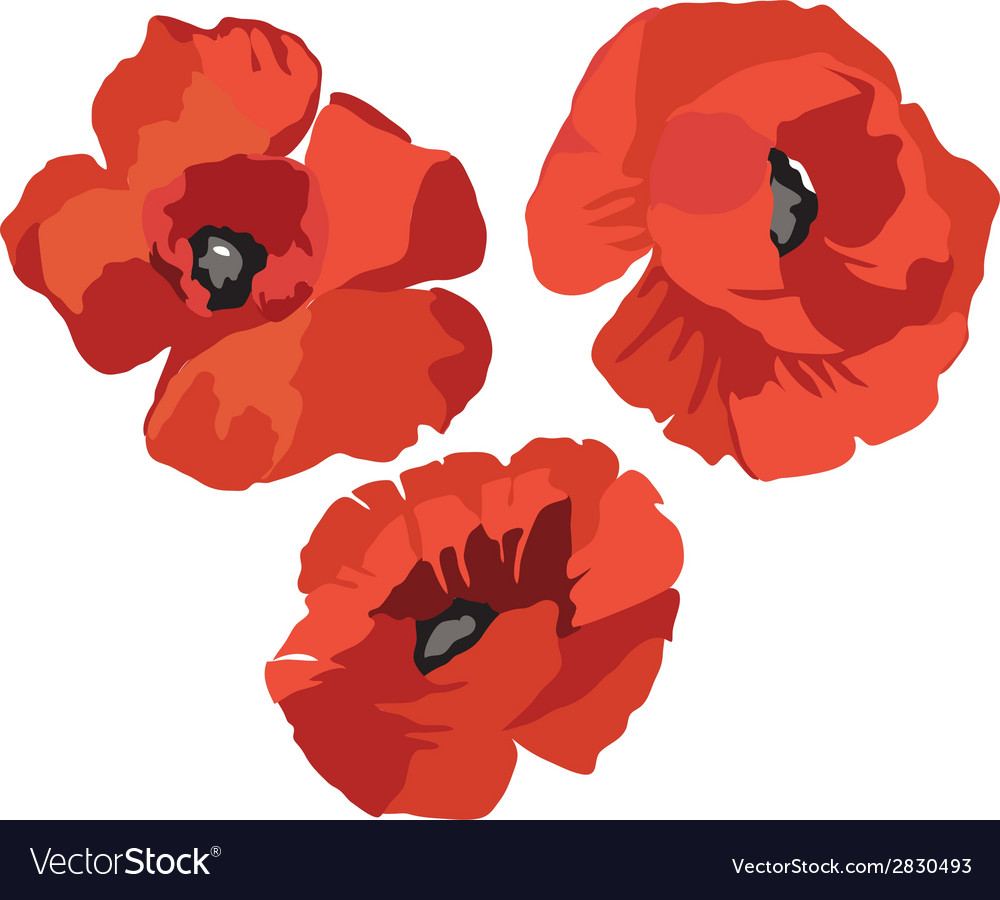 Flower poppy set vector | Price: 1 Credit (USD $1)
