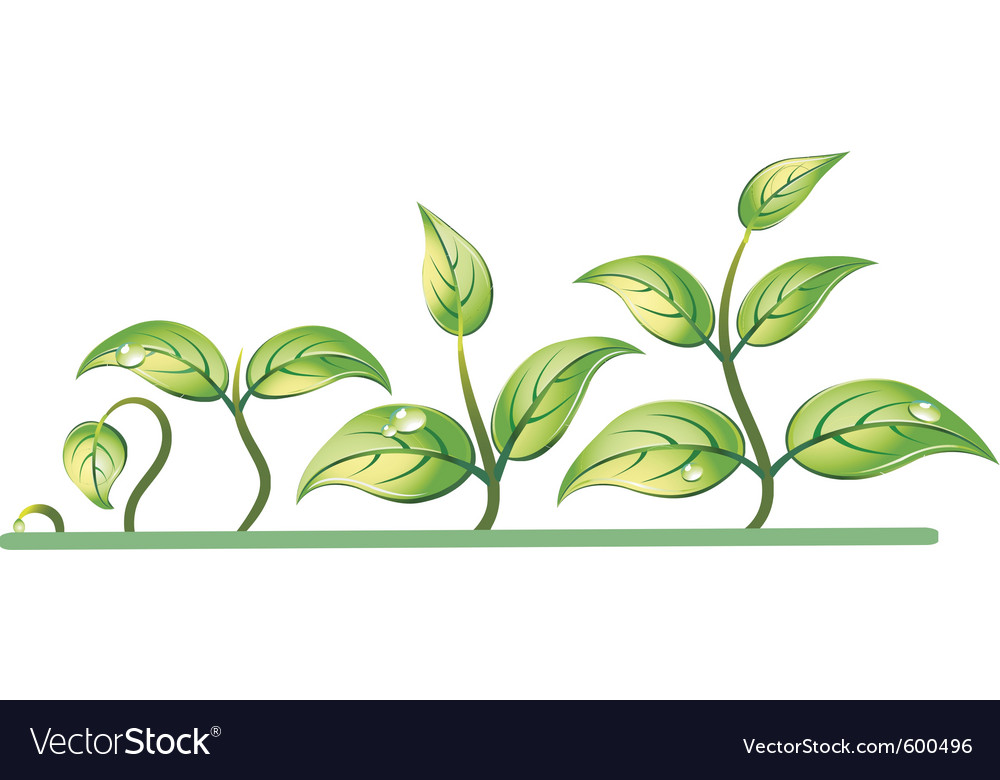 Progression of seedling growth vector | Price: 1 Credit (USD $1)