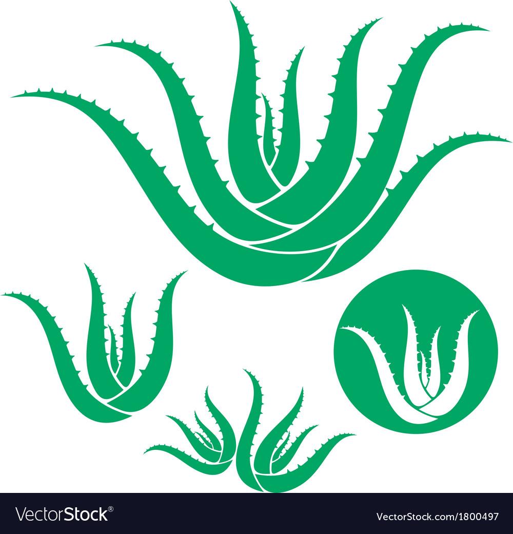 Aloe vector | Price: 1 Credit (USD $1)
