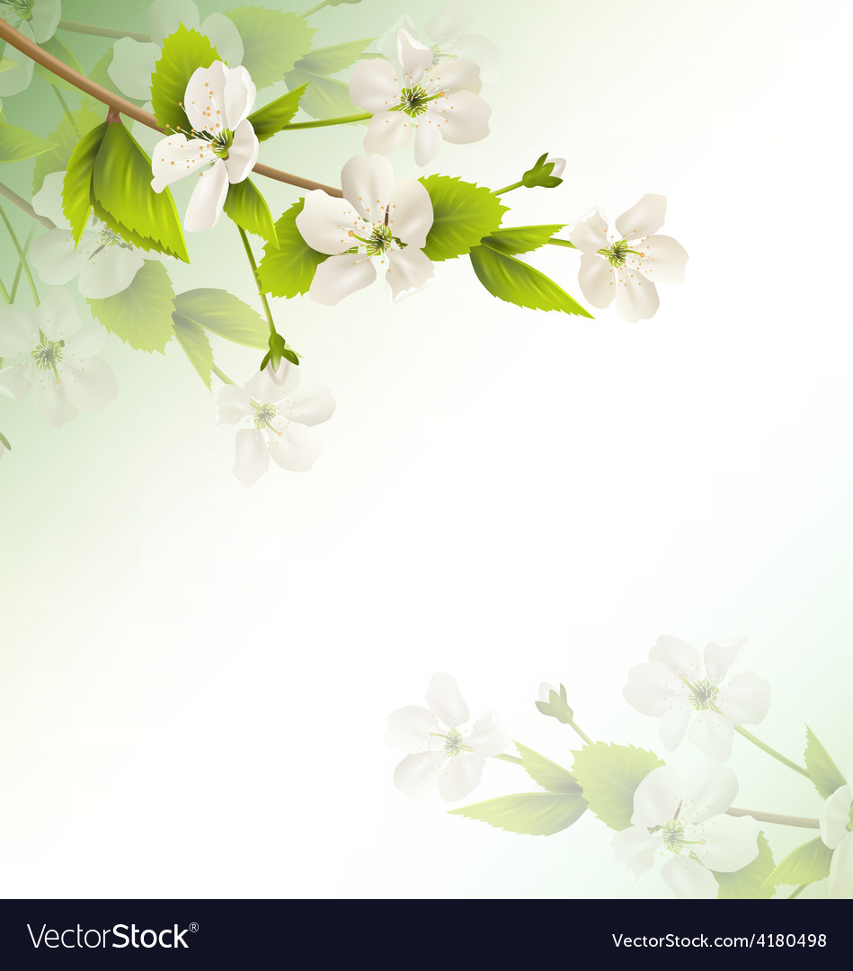 Cherry branch with white flowers on green vector | Price: 1 Credit (USD $1)