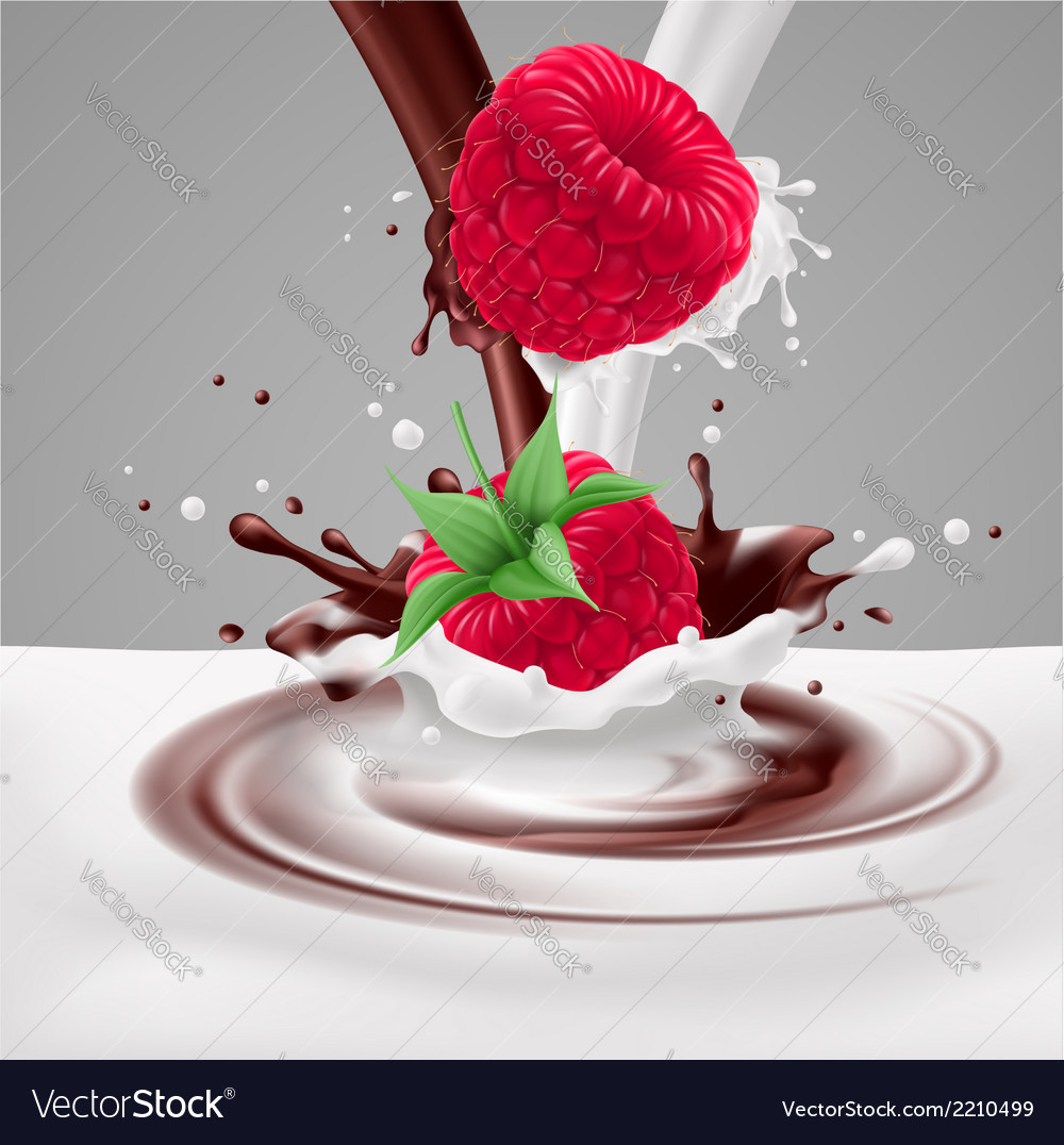 Raspberries with milk and chocolate vector | Price: 1 Credit (USD $1)