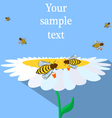 Bees and flower vector