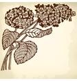 Hydrangea branch vector