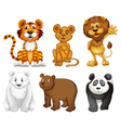 Six wild animals vector