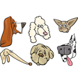 Cartoon dogs heads set vector