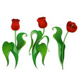 Three red tulips vector