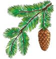 Branch of pine with cone vector