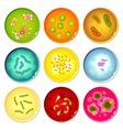 Petri dishes with bacterial colonies vector