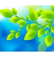Green leaves on the blue sky vector