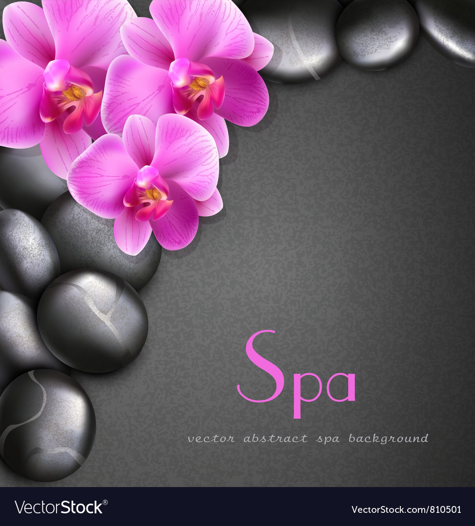 Spa background with stones and orchids vector   Price: 3 Credit (USD $3)
