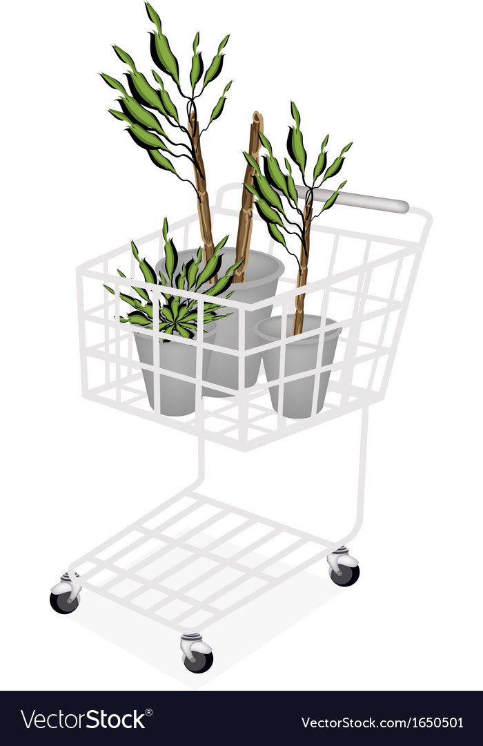 Yucca trees or dracaena plants in a shopping cart vector | Price: 1 Credit (USD $1)