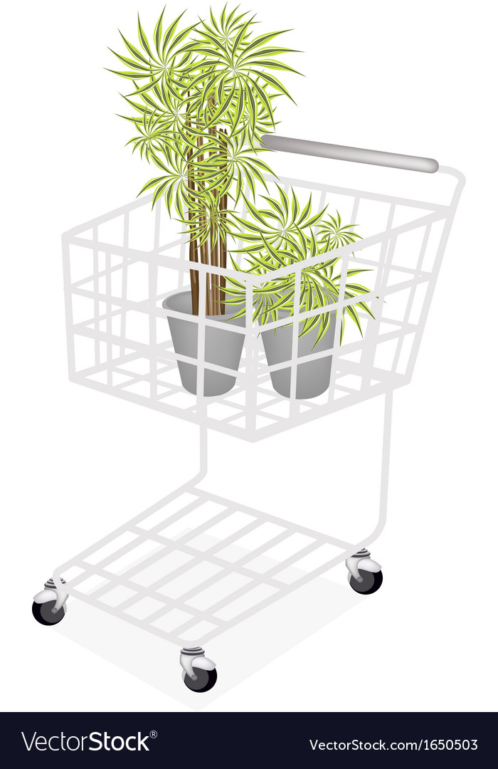 Beautiful dracaena plants in a shopping cart vector | Price: 1 Credit (USD $1)
