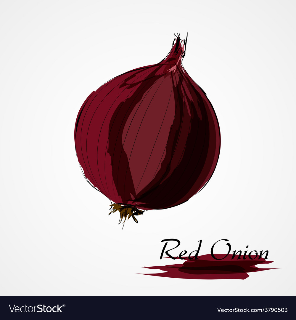 Red onion vector | Price: 1 Credit (USD $1)