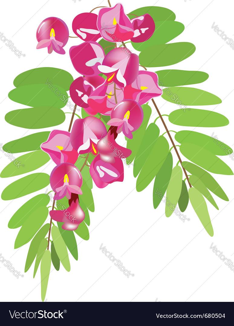 Branch of acacia vector | Price: 1 Credit (USD $1)