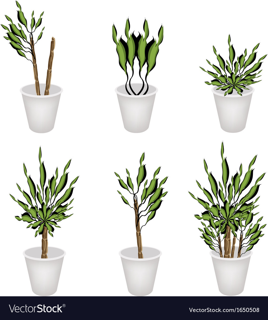 Yucca tree or dracaena plant in a flower pot vector | Price: 1 Credit (USD $1)