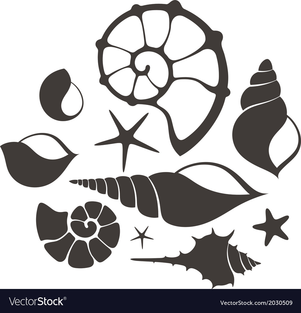Shell set vector | Price: 1 Credit (USD $1)
