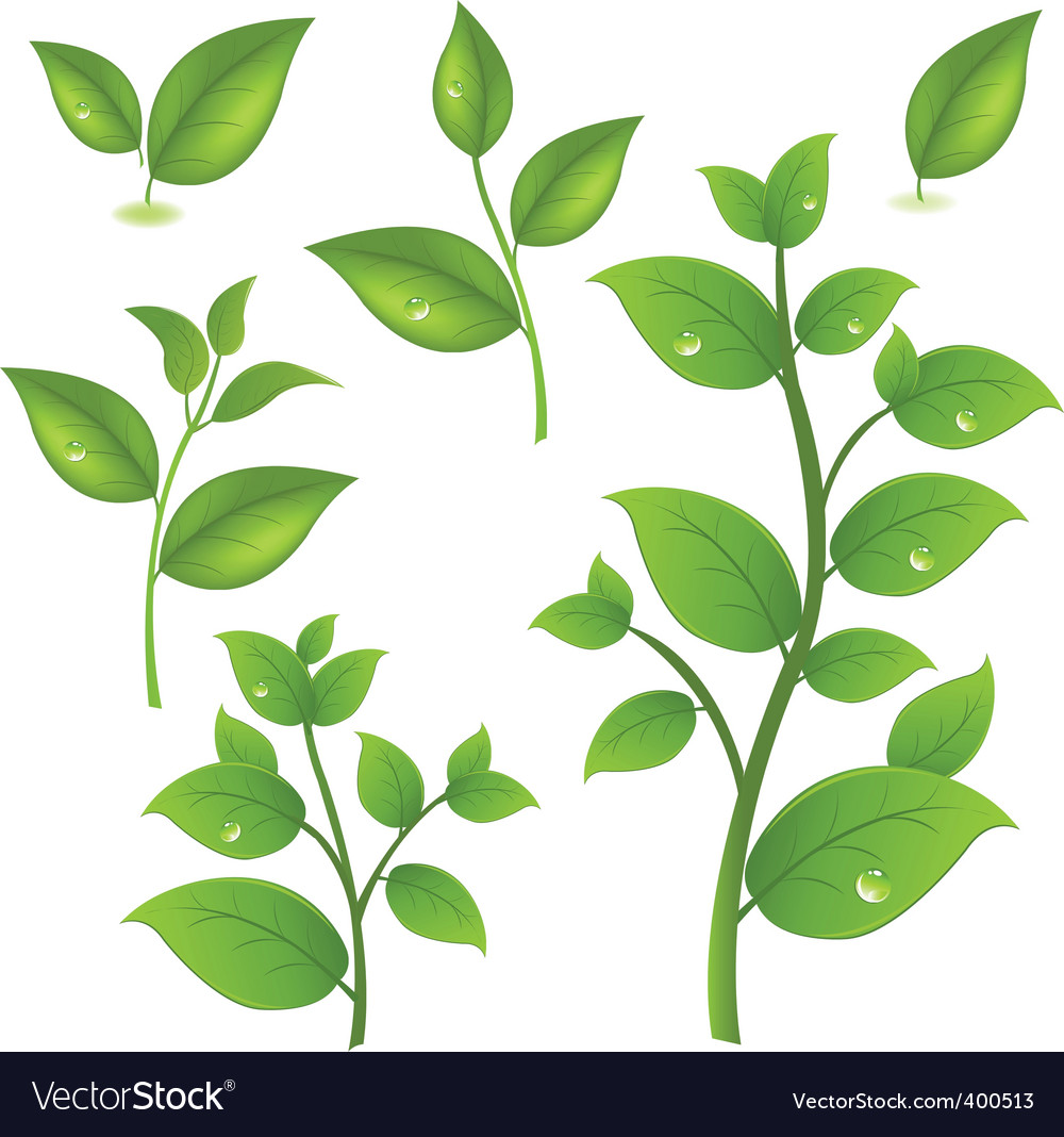 Leaf branches vector | Price: 1 Credit (USD $1)