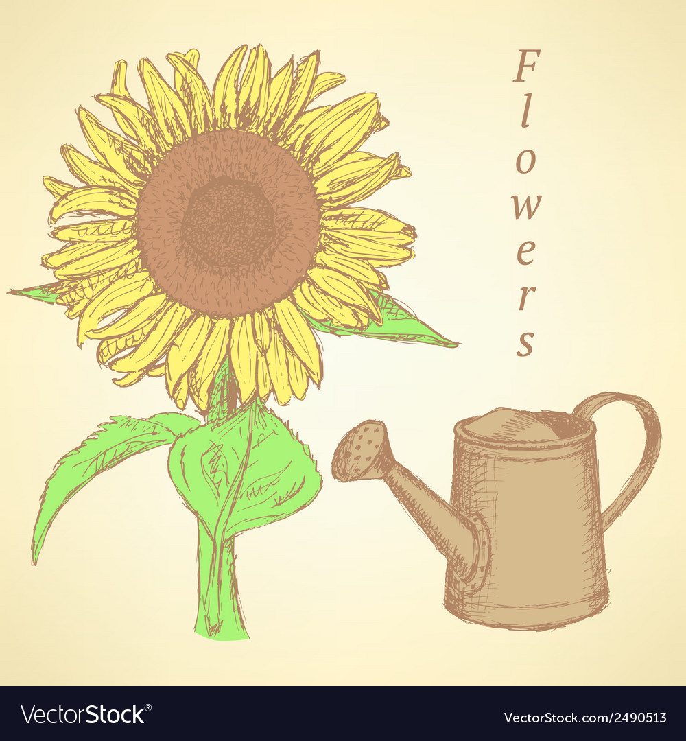 Watering can sunflower vector | Price: 1 Credit (USD $1)