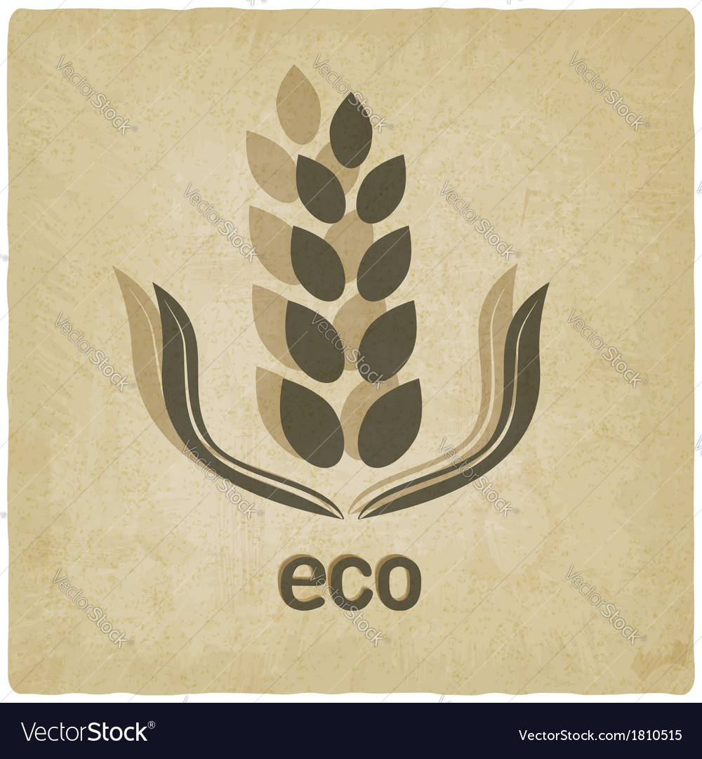 Organic grain old background vector | Price: 1 Credit (USD $1)