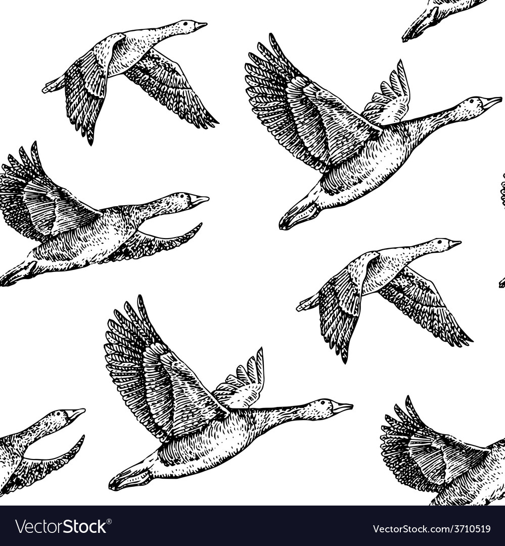 Flying geese vector | Price: 1 Credit (USD $1)