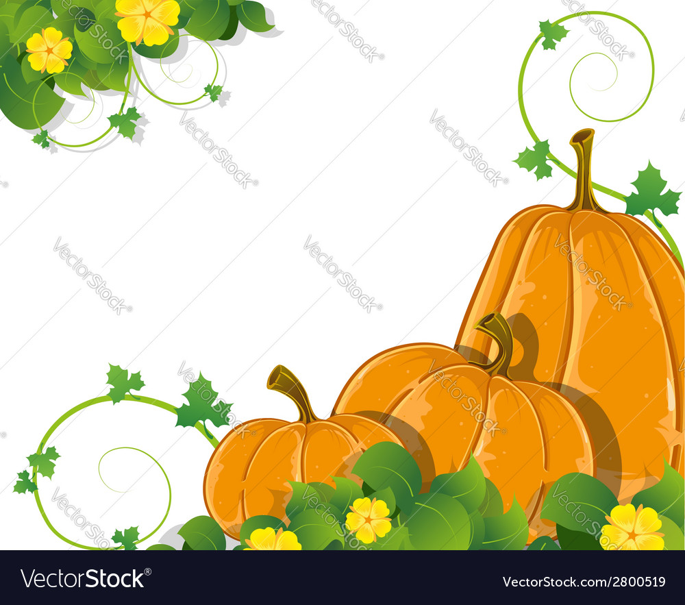 Pumpkins with leaves and flowers vector | Price: 1 Credit (USD $1)