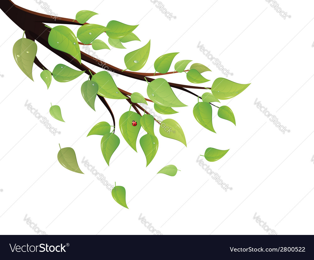 Green leaves tree branch vector | Price: 1 Credit (USD $1)