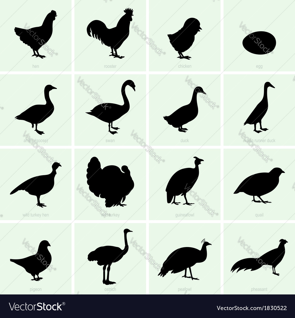 Poultry vector | Price: 1 Credit (USD $1)