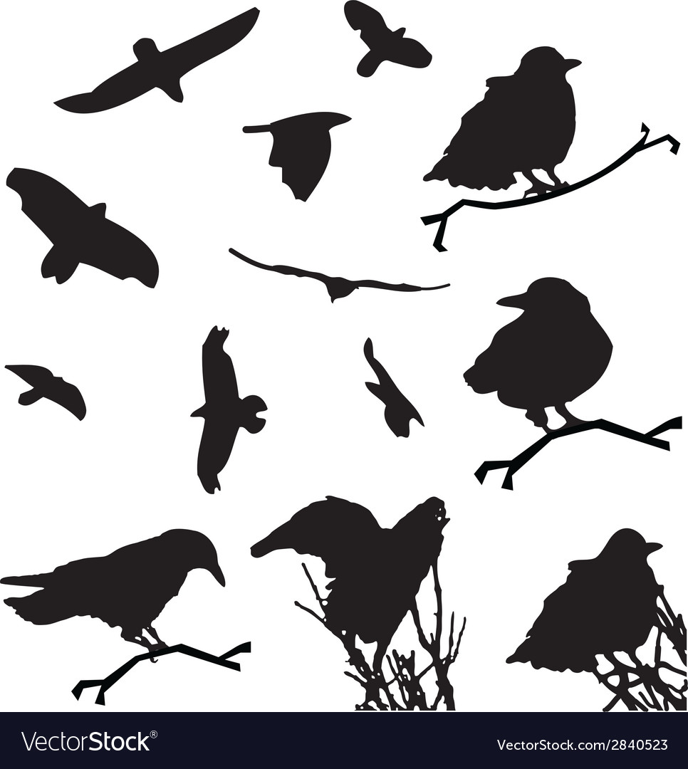 Bird silhouette animal clip art vector | Price: 1 Credit (USD $1)