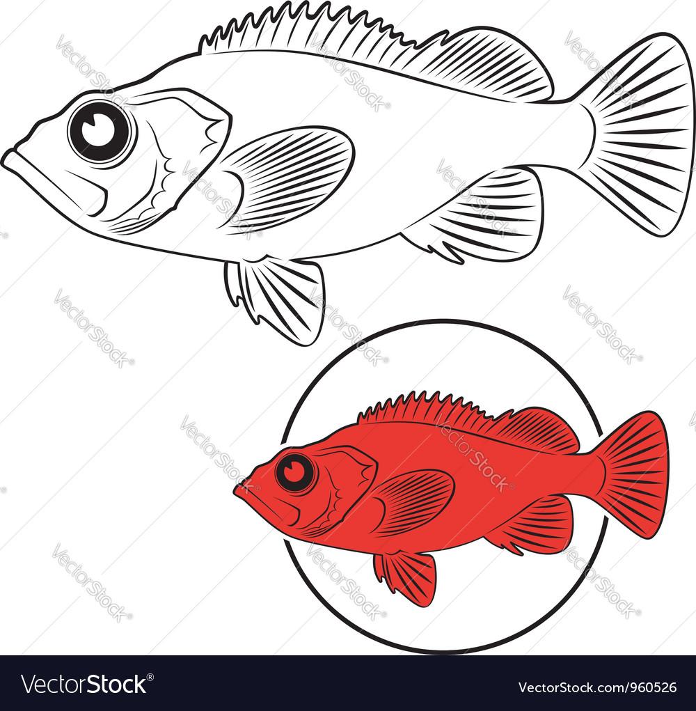 Sea bass vector | Price: 1 Credit (USD $1)