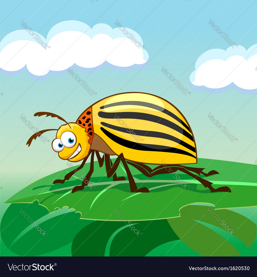 Cartoon colorado potato beetle vector | Price: 1 Credit (USD $1)