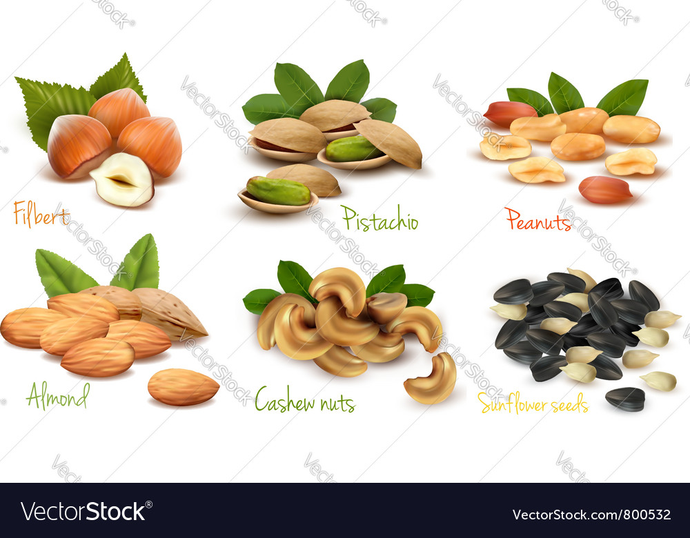 Collection of ripe nuts vector | Price: 3 Credit (USD $3)