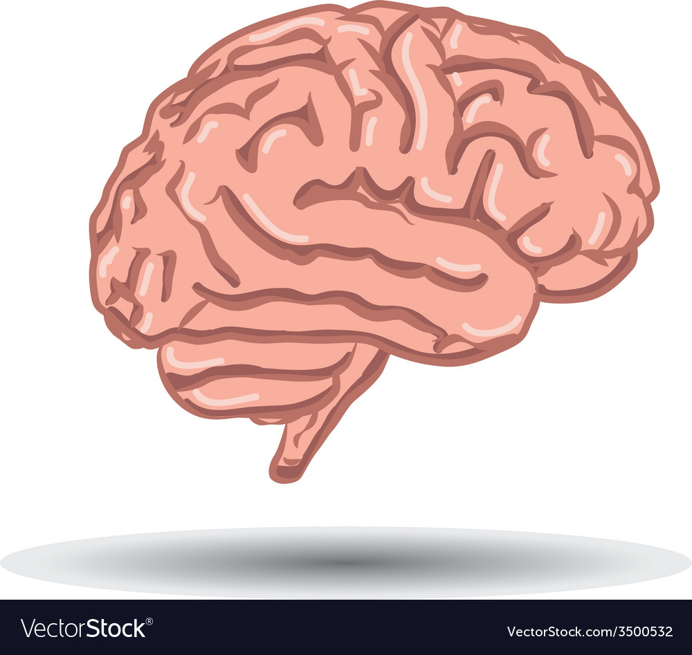 Human brain on white background vector | Price: 1 Credit (USD $1)