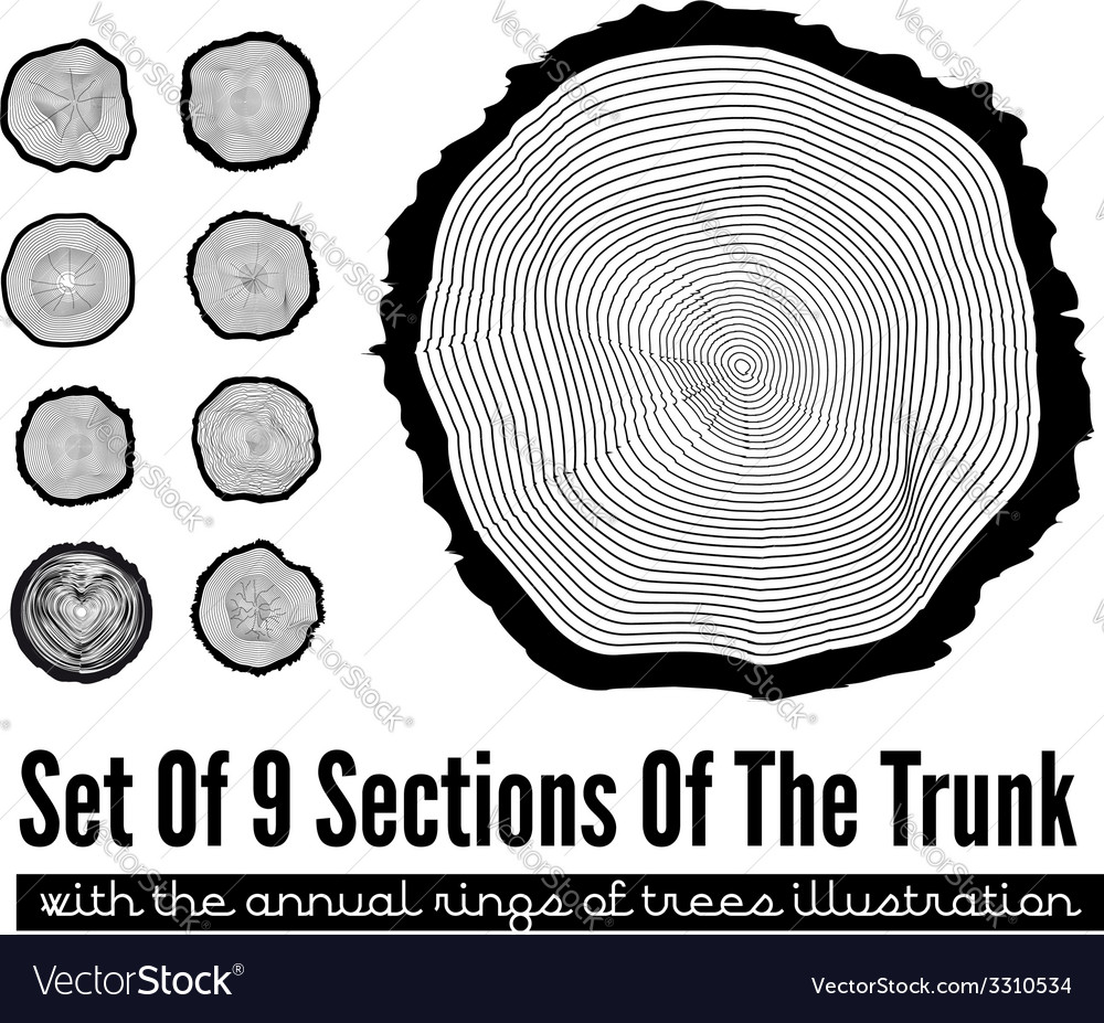 Cross section of the trunk vector | Price: 1 Credit (USD $1)
