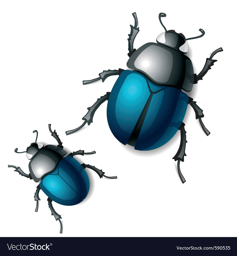 Beetle vector | Price: 3 Credit (USD $3)