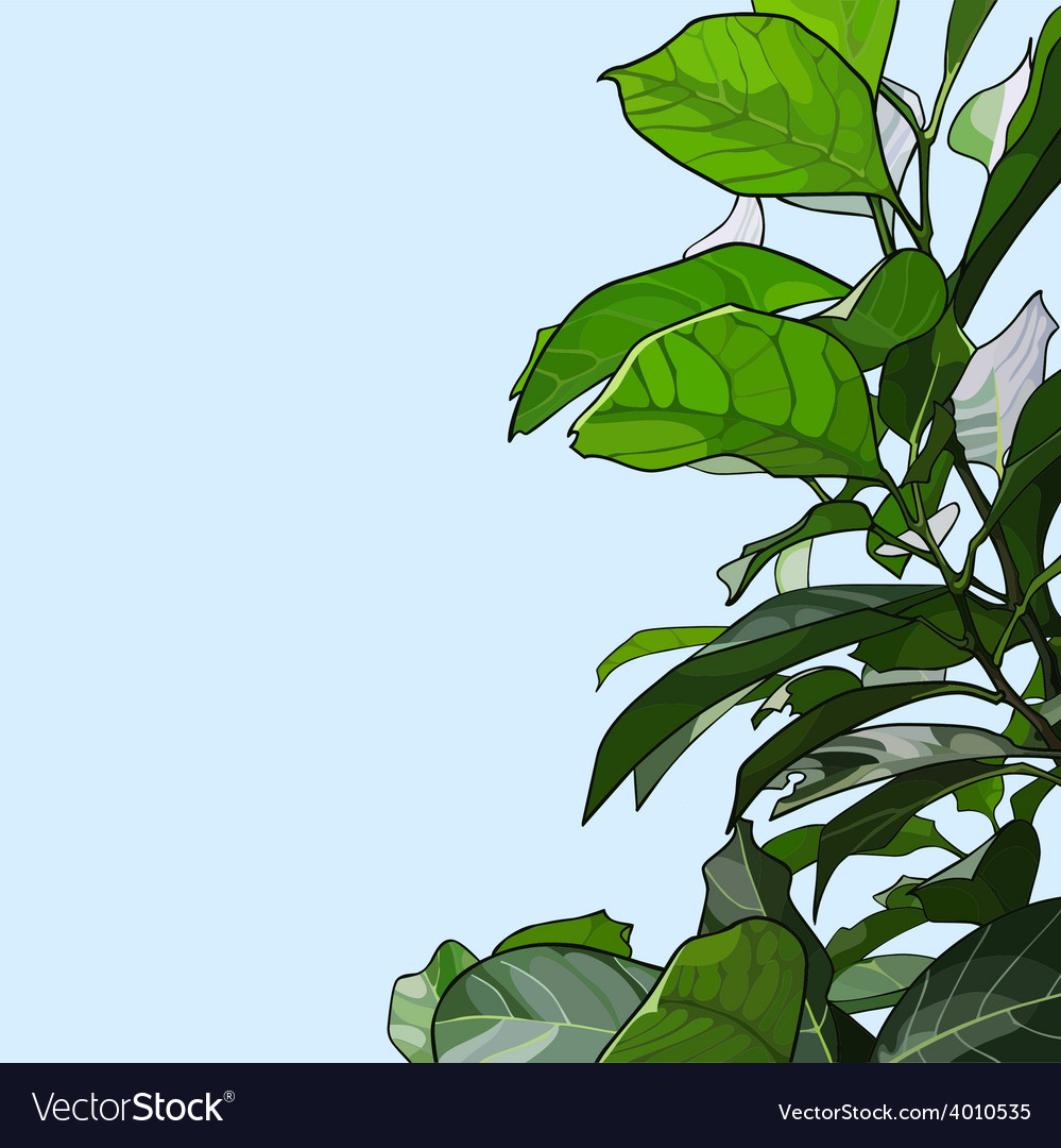 Plant with green leaves vector | Price: 3 Credit (USD $3)