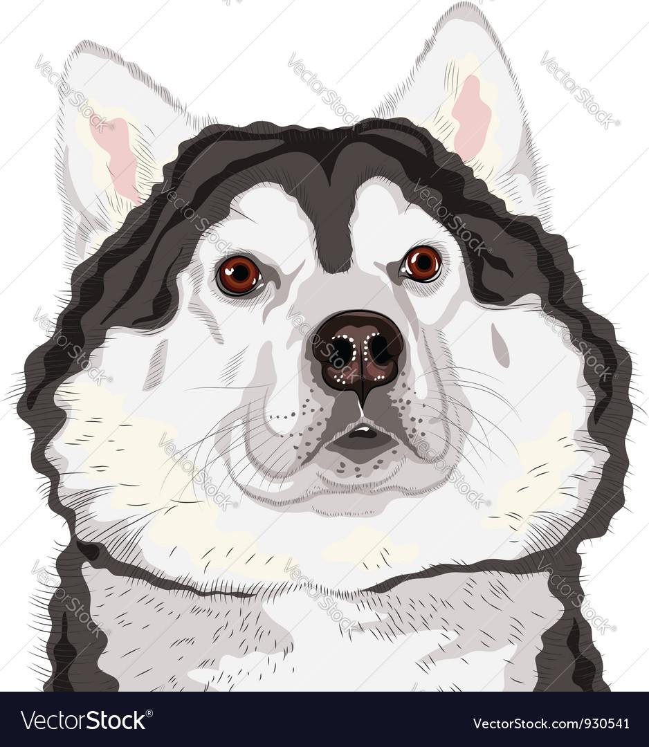Dog alaskan malamute breed vector | Price: 3 Credit (USD $3)