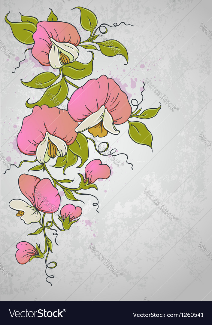 Flowers sweet pea vector | Price: 1 Credit (USD $1)