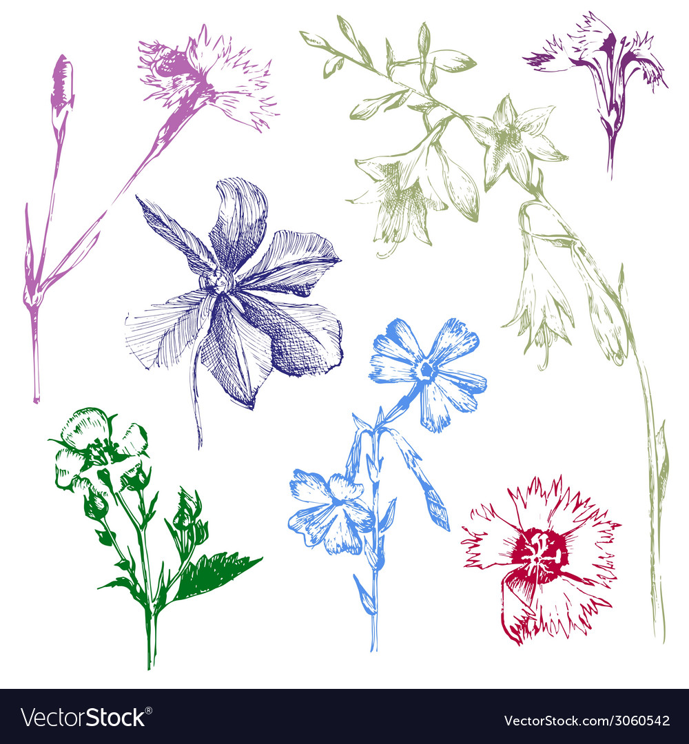 Hand drawn spring flowers vector   Price: 1 Credit (USD $1)