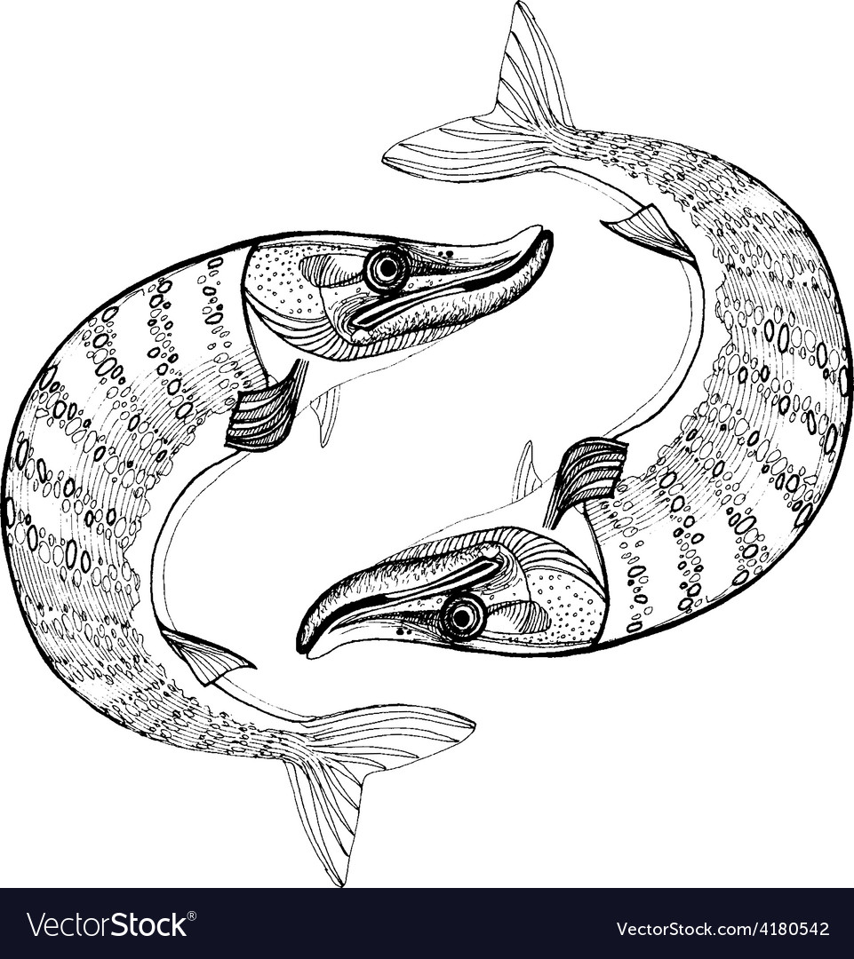 Northern pike vector | Price: 1 Credit (USD $1)