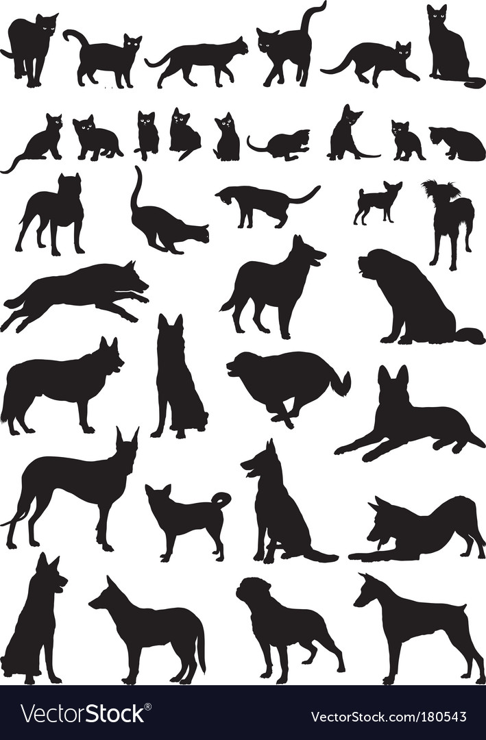 Cats and dogs vector | Price: 1 Credit (USD $1)