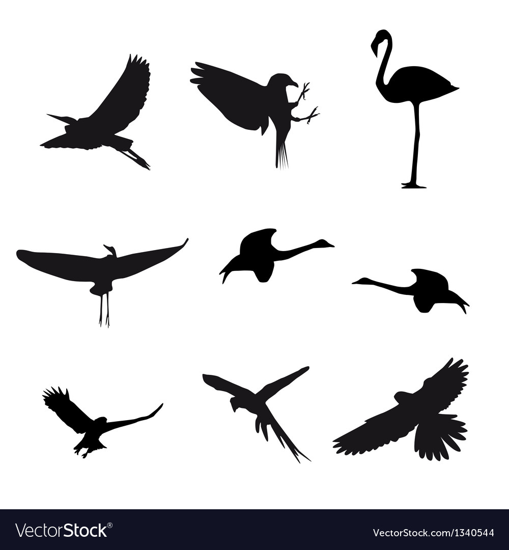 Set of different photographs of birds isolated on vector | Price: 1 Credit (USD $1)
