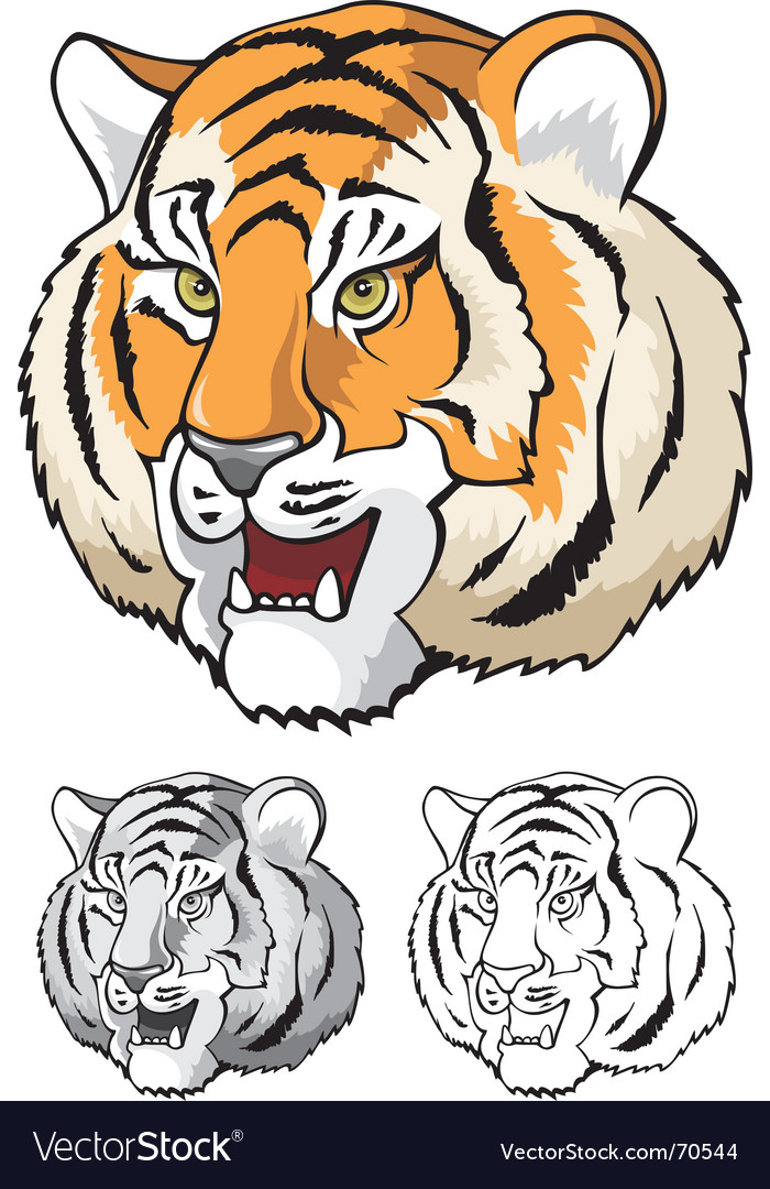 Tiger head close up vector | Price: 1 Credit (USD $1)